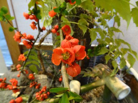 ボケの花−2.jpg