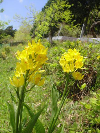 名知らずの花−4.jpg