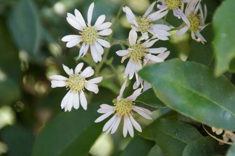 土手の花−1.jpg