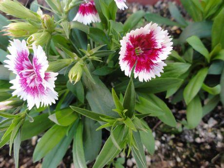 土手の花−5.jpg
