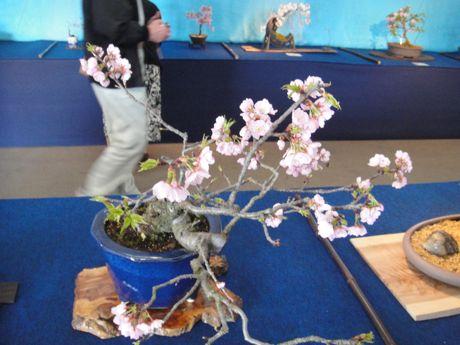 寒桜−2.jpg