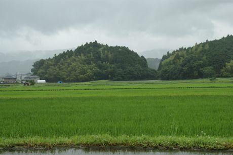 小雨の田園風景−2.jpg