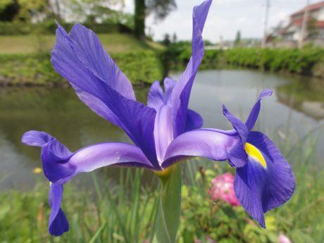 東馬出しの花−1.jpg