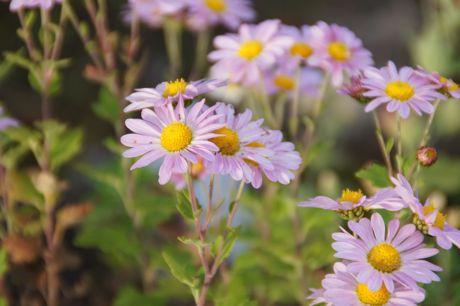東馬出しの花−2☆.jpg
