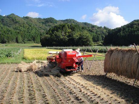 稲刈り風景−1.jpg