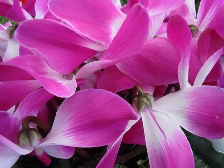 花−1.jpg