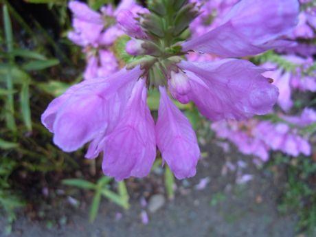 軒下の花−2.jpg