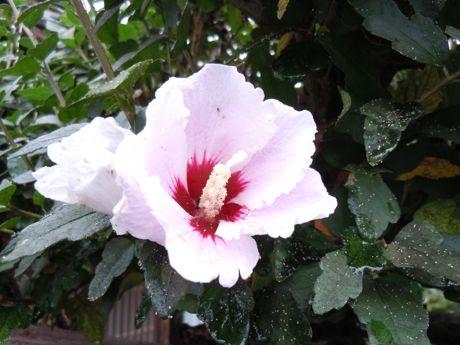 軒下の花−5.jpg