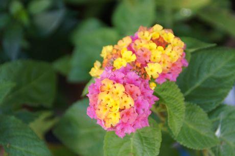 近所の軒下の花−1.jpg