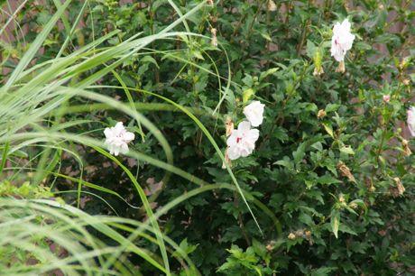 道端の花ーC.jpg