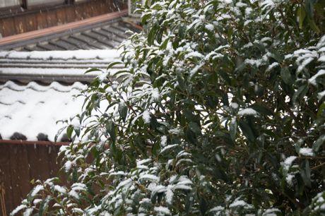 雪ですね−1.jpg