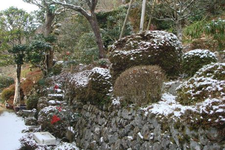 雪の残る庭先.jpg