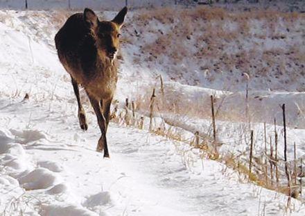 鹿−2.jpg