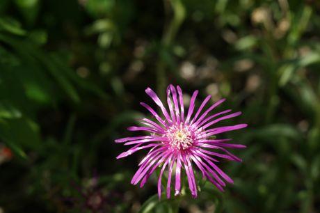 黒岡川辺の花−3.jpg
