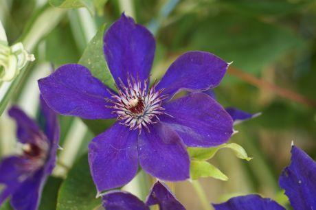 黒岡川辺の花−6.jpg